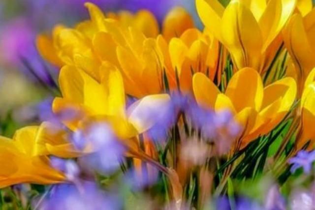 お花や植物が好き❤️
