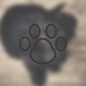 動物:フリートーク